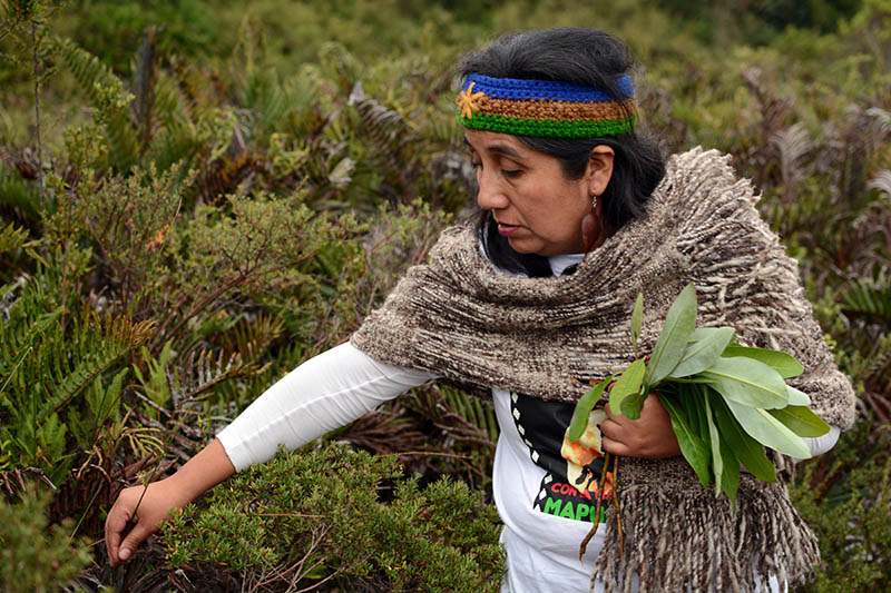 10 Comunidad Williche Alto del Fundo Gamboa